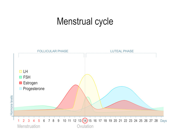 Menstrual cycle chart showing hormone fluctuations throughout the month